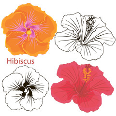hibiscus flowers. contours of flowers on a white background.