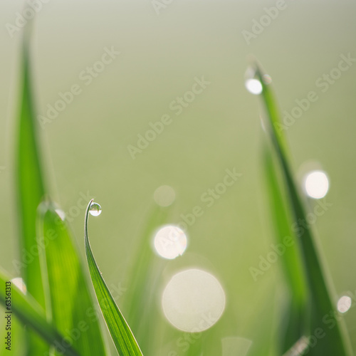 Lush green grass with dew.