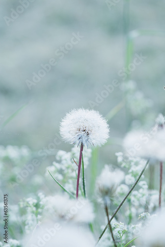 Tiny summer dandelion with pastel colors