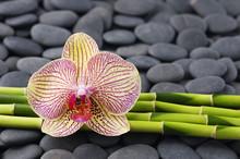 Orchidée magnifique et mince bosquet de bambous sur galets