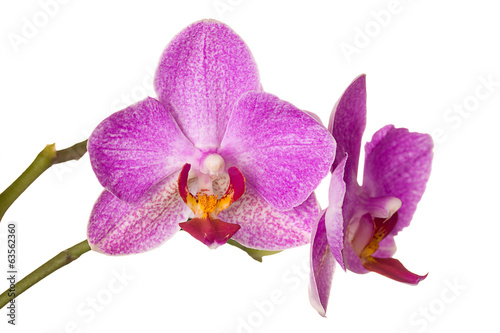Beautiful orchid on white background