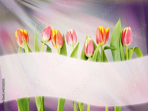 Bright abstract background with tulip flowers and banner