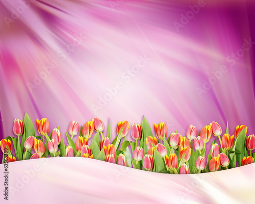 Abstract bright background with tulip flowers