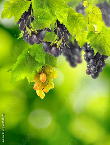 image of a beautiful grapevine