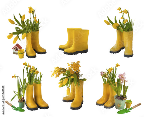 Set 6 pair of yellow gumboots and daffodils, tulips, mimosa  iso