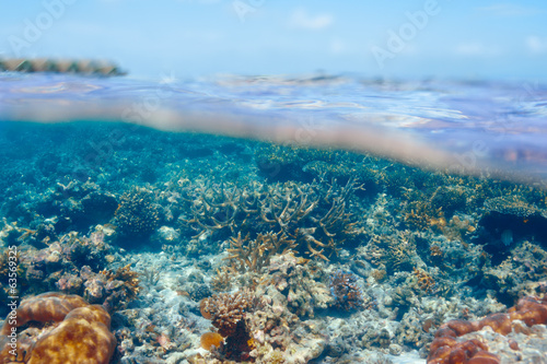 Coral reef at Maldives - 63569325