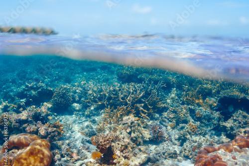 Papiers peints Recifs coralliens Coral reef at Maldives