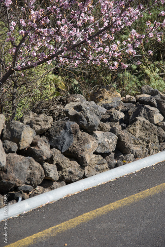 Flowered almond and road, Tenerife, Canary Islands, Spain