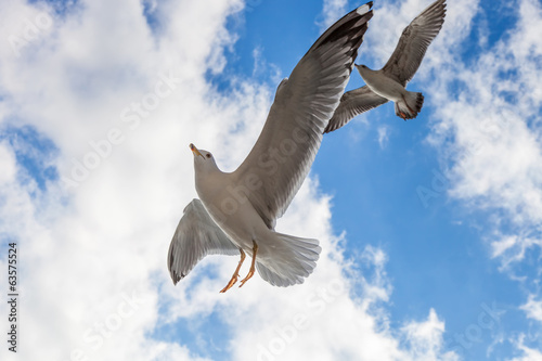 Two seagulls are flying against the blue sky