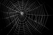 pretty scary frightening spider web for halloween - 63575993
