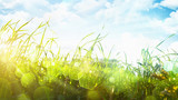 Green grass and bright sun
