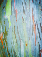 Abstract painting by eucalyptus tree bark