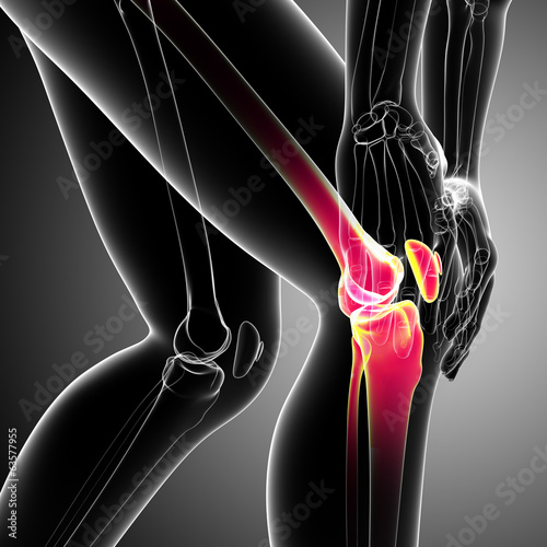 Anatomy of knee pain on gray