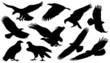 eagle silouettes - 63578714