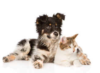 mixed breed dog and cat looking away. isolated on white