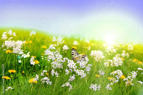 Blumenwiese - 63583509