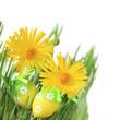Blumen & Eier