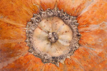 A close up of pumpkin texture