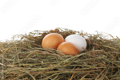 Eggs on hay, isolated on white