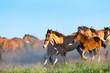 Herd of horses running in summer