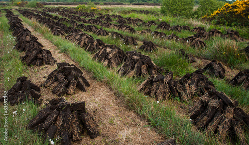 stacks of turf drying in Irish peat bog