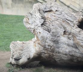 tronco seco