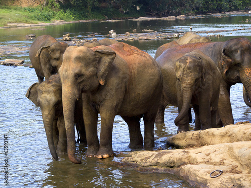 Elephant bathing at the orphanage