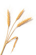 Three Stalks Of Wheat