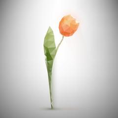 polygonal tulip