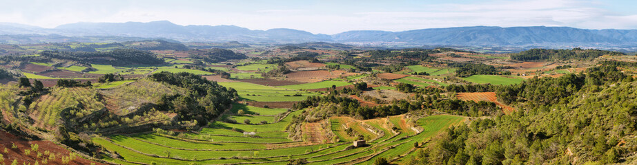 Plantation fields near Vallbona de les Monges