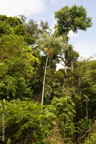 Amazon jungle tree