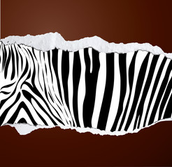 Zebra pattern on brown torn paper, vector