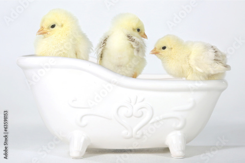 Adorable Baby Chicks in a Bathtub