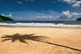 Fototapety Maracas bay Trinidad and Tobago beach palm tree shadow sharp