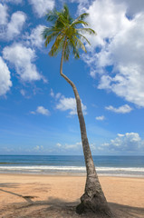 Tropical beach palm tree Trinidad and Tobago Maracas Bay