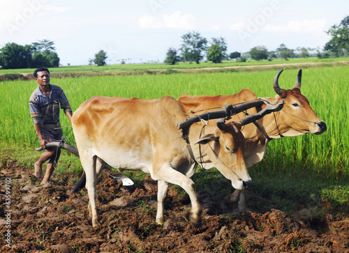 Cambodian Local Farmer Ploughing The Soil