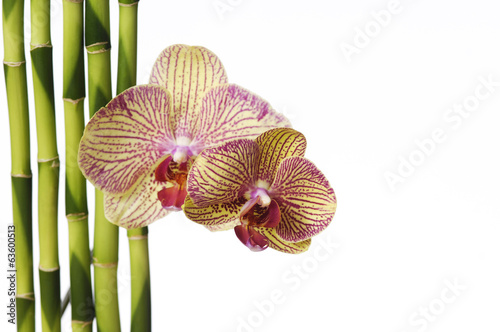 Beautiful Gorgeous orchid with bamboo grove