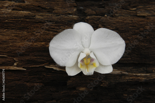 White orchid flowers and rustic wood texture