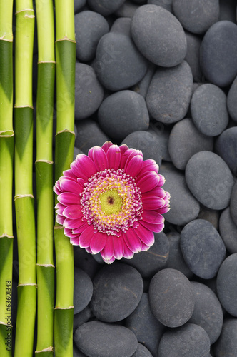 red gerbera and thin bamboo grove on stones background