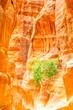 Scenic Siq of Petra Petra, Ma'an, Jordan.