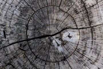 Wooden background and texture,rings of cut tree trunk.