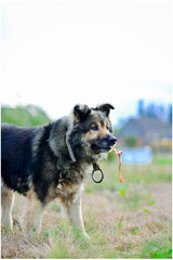 Beautiful gray-black hairy dog with bone outdoors