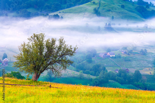 Lonely tree in the misty morning in mountains