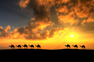 Camel caravan in desert.