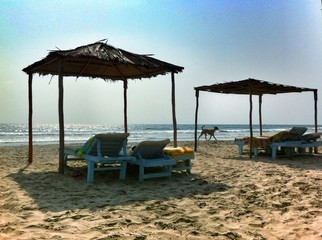 dog and sun beds at the beach on sunset in Goa