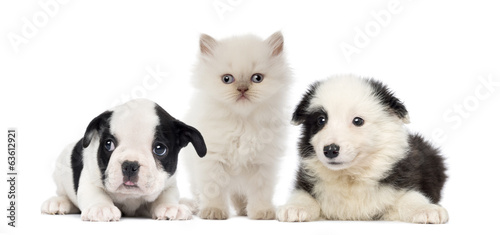black and white Puppies and kitten