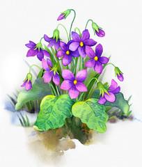 Watercolor painting. Bush forest violet