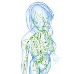 Anatomy of female lymphatic system