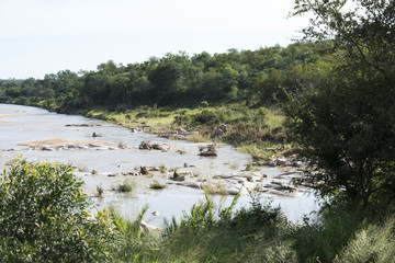 elephant river in kruger national park