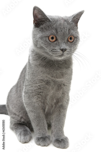 kitten closeup isolated on a white background. vertical photo.
